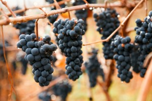 WineGarageHighlights-028